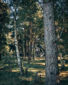 Hiddensee, Haus im Kiefernwald