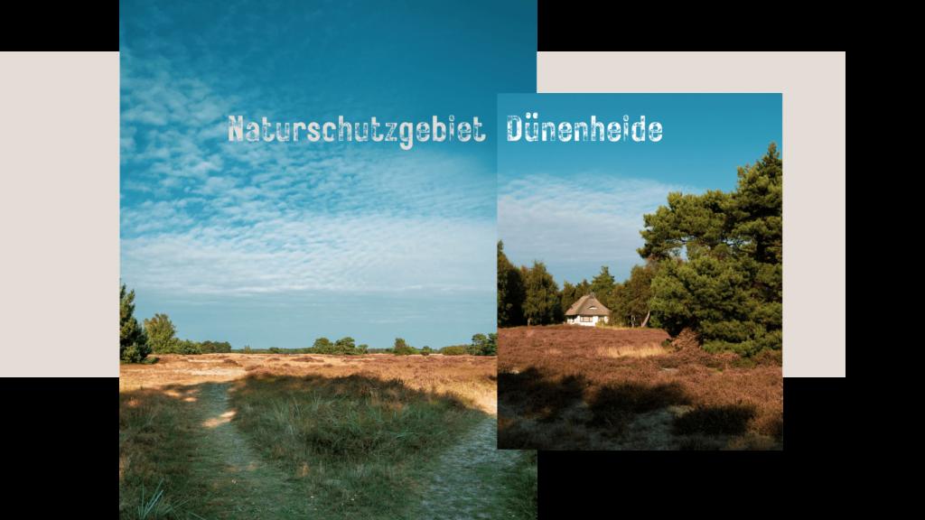 Wanderung durch die Dünenheide Hiddensee im Herbst