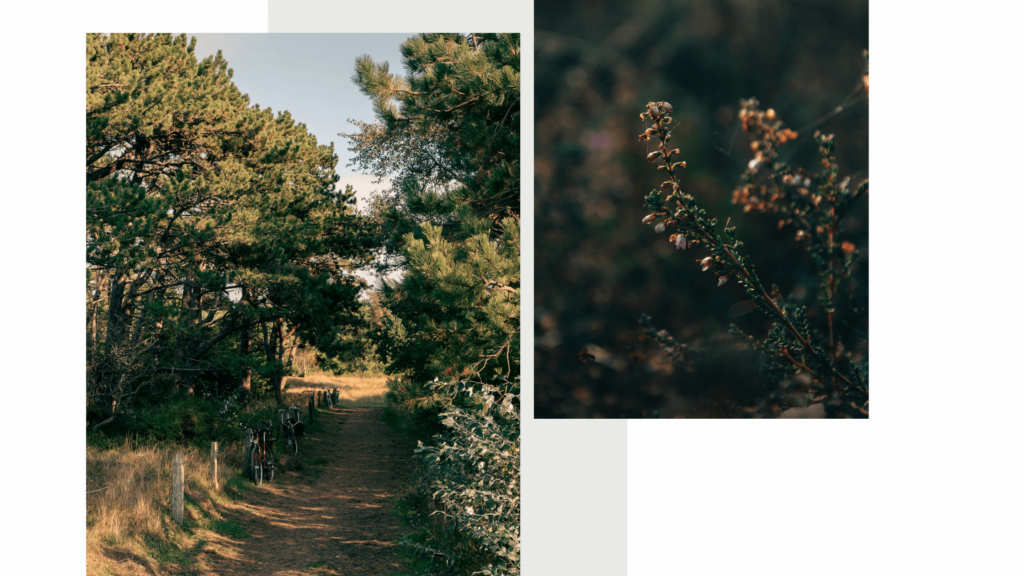 Wanderung auf Hiddensee im Herbst, Von Neuendorf durch die Heide Richtung Vitte